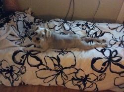 Rimbaud prend aussi le contrôle du lit d'invité