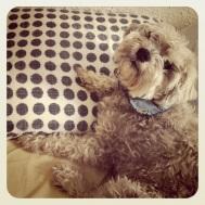 Rimbaud aime bien s'approprier l'oreiller... parce que c'est interdit! :)